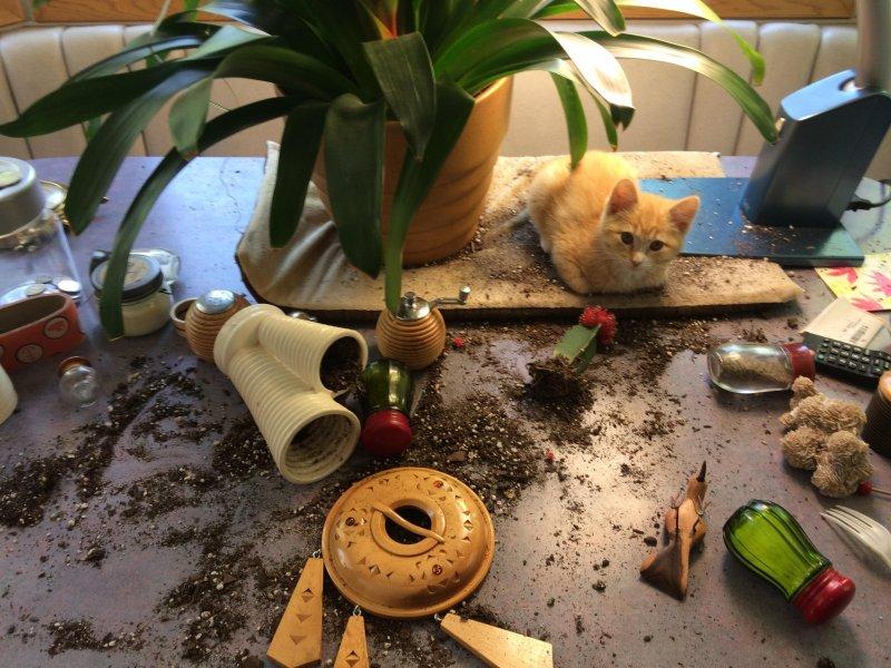 20 смешных фото животных, которые помогут позитивно завершить рабочую неделю подборка, смешные животные, топ, юмор
