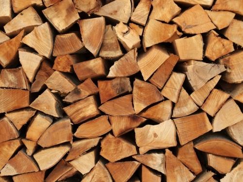 В Минэкономразвития предложили раздавать древесину