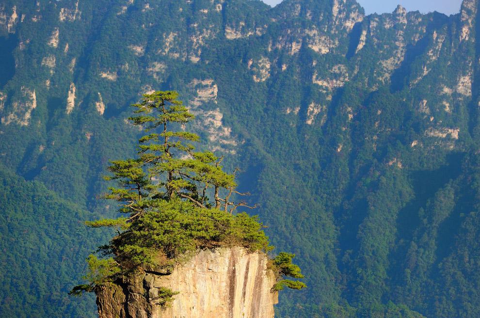 Уникальная скала с ёлками