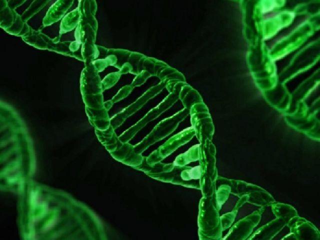 Ремонт ДНК своими руками: руководство для клеток