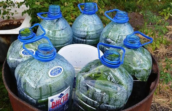 Огурцы в бутылках — удобно и выгодно