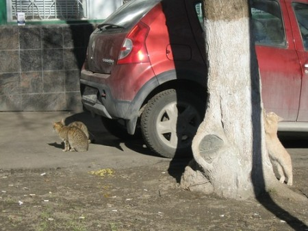 Джуманджи. Животные в мегаполисе. Кошки (2015)