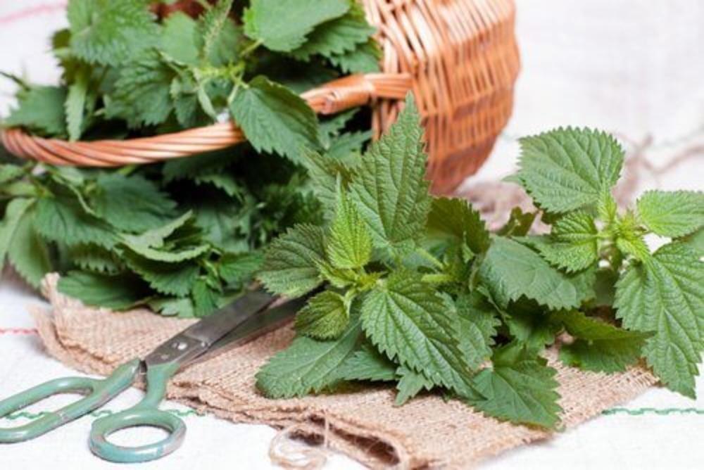 Для профилактики почек: травяные напитки, предупреждающие образование камней
