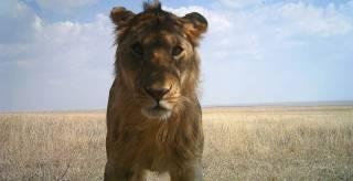 Подведены итоги наблюдения за фауной Африки с помощью фотоловуше