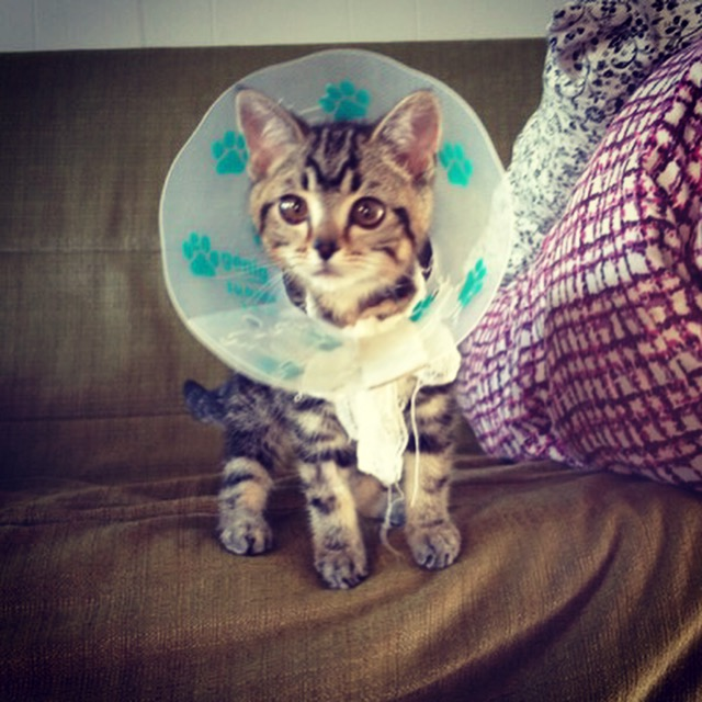 Кошка-пришелец - новая звезда интернета