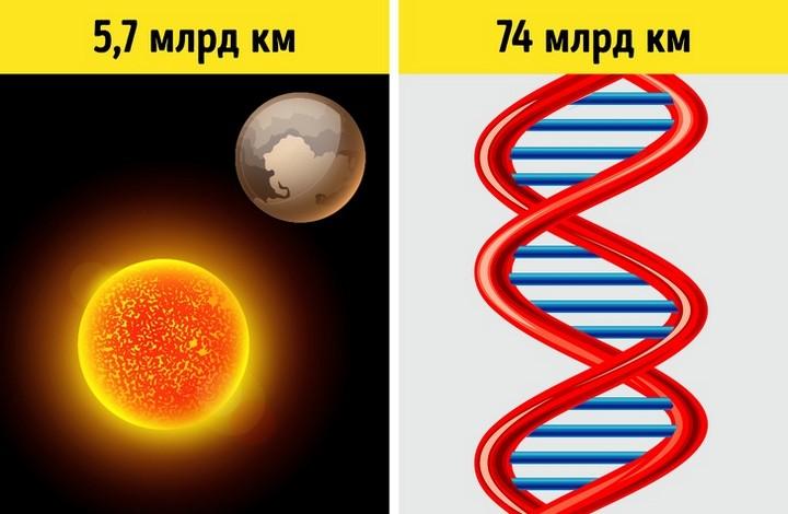 Факты о ДНК, которые помогут понять, как устроена живая природа