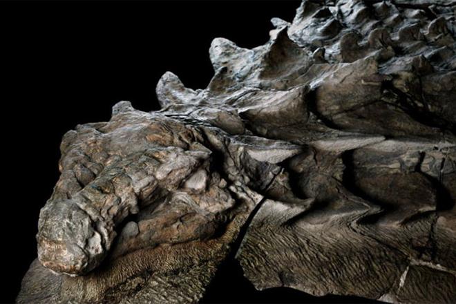 Шахтеры нашли в глубинах рудника древнее окаменевшее существо