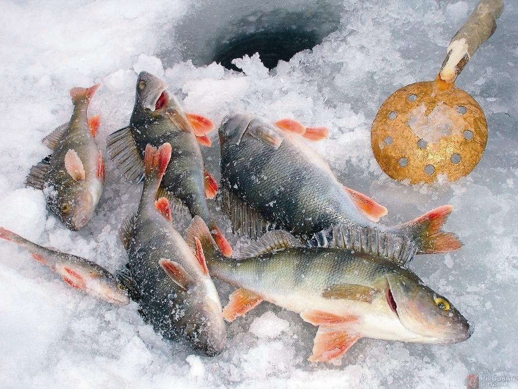 картинки для рабочего стола зимняя рыбалка родом
