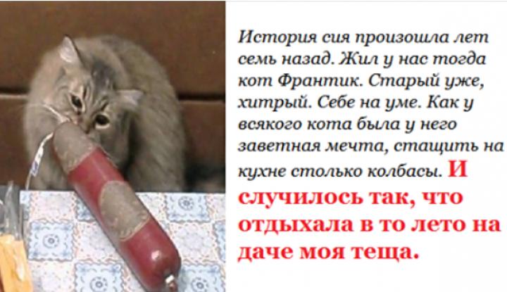 История о коте и тёще