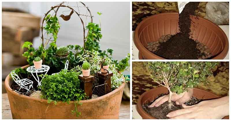 Он лучше любого декора: создайте и вы очаровательный мини-сад в горшке