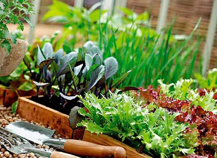 Домашняя аптечка - для огорода