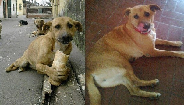 Аргентинская собака Водка - счастливая история одной фотографии