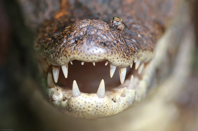 Рептилии фотографа Nicolas Reusens