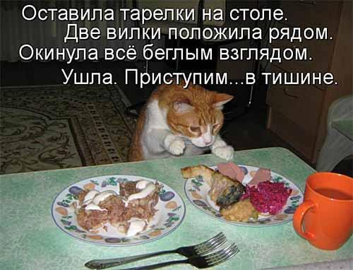Кулинарный юмор в котоматрицах 28