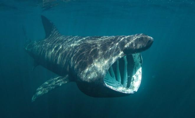 Мужчина решил поплавать с китовой акулой, но перепутал и прыгнул с лодки к обычной Культура