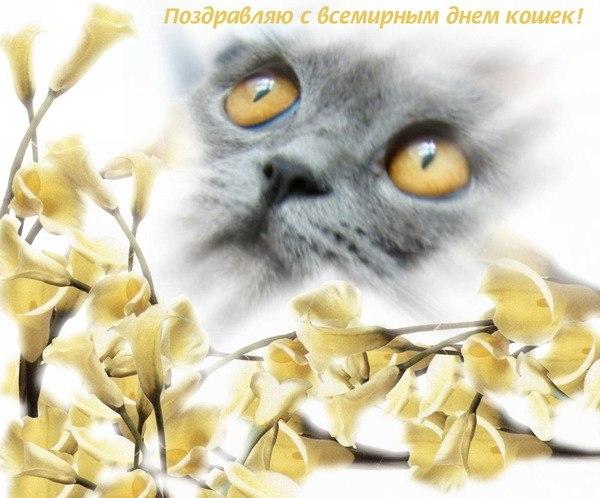 Солнышком, открытки 1 марта день кошек