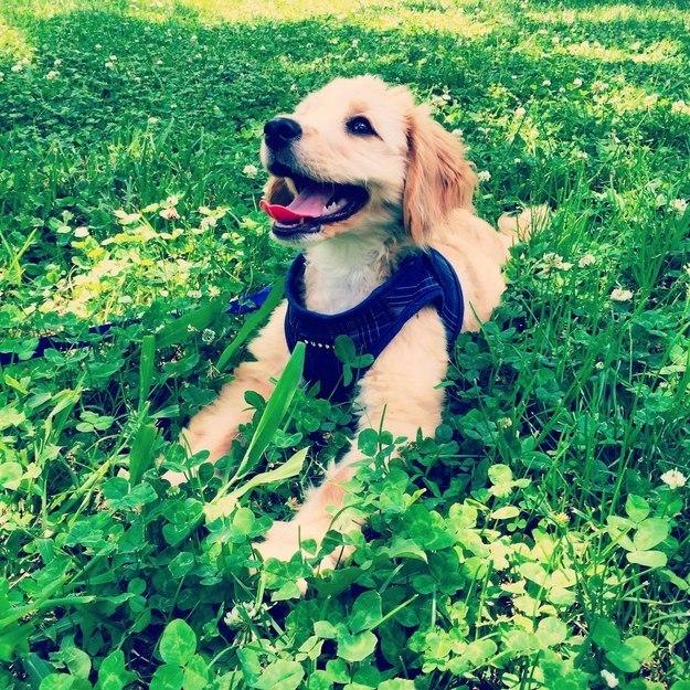 самые милые щеночки в мире (14)