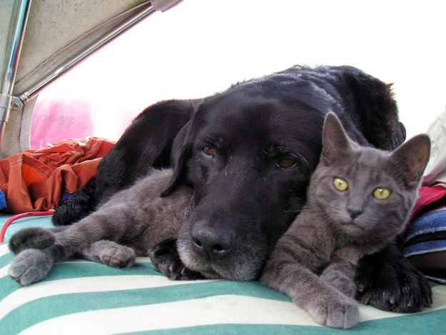Когда кот решил прокормить всю нашу семью: меня, себя и пса Бакса…