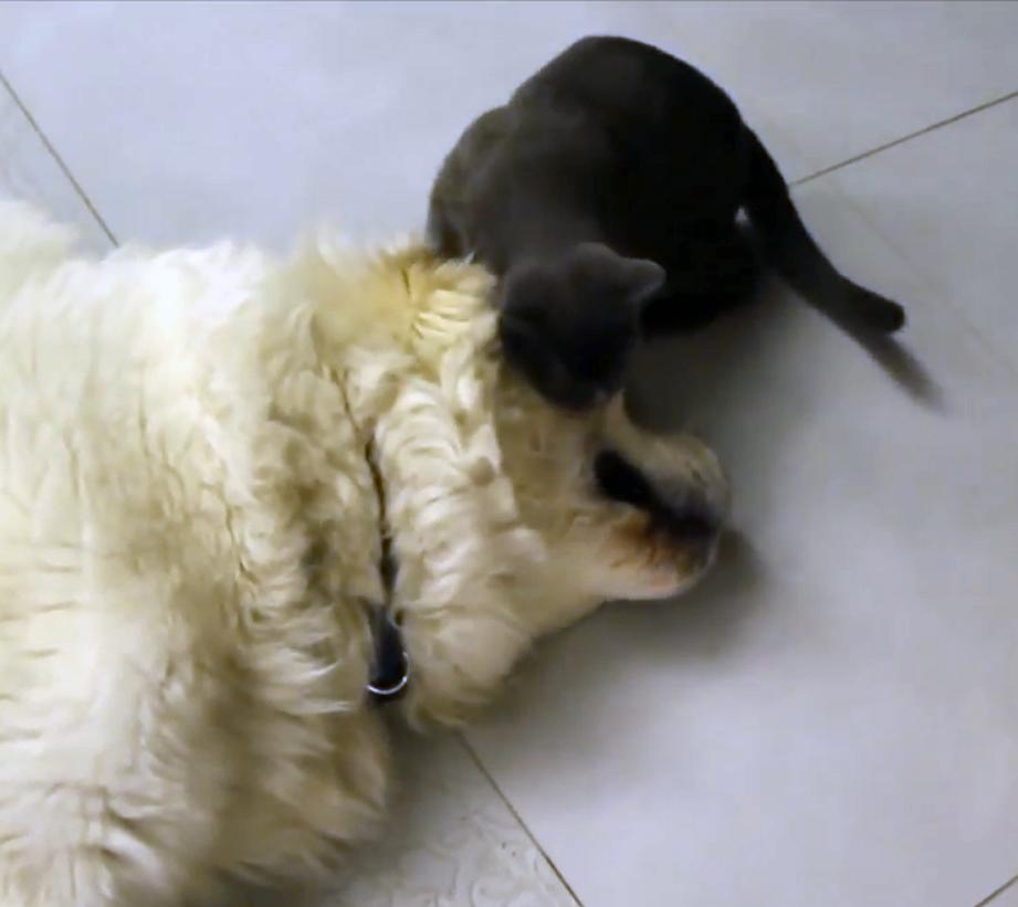 Наглый-наглый Кот
