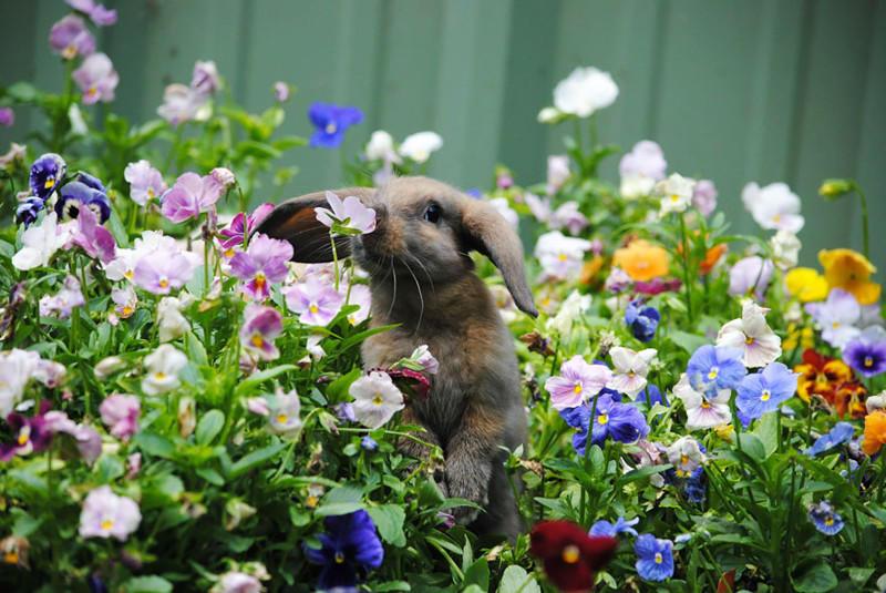 Животные, которые любят вдых…