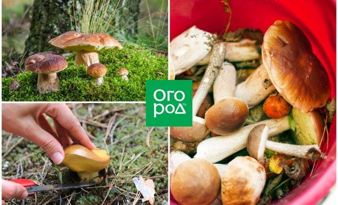 Когда собирать грибы: народные приметы в помощь любителям тихой охоты