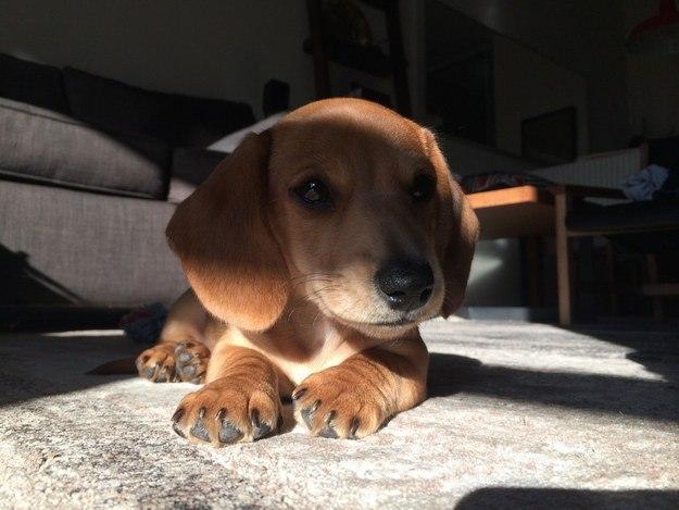 самые милые щеночки в мире (32)