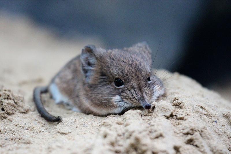 Детёныши редких животных, которых вы вряд ли встретите в живую детёныши, интересное, фото