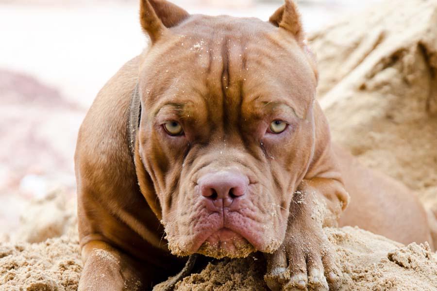 За убийство собаки напавшей …