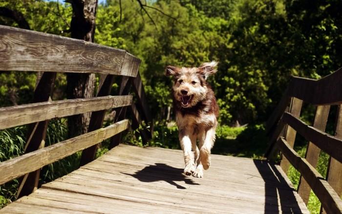 20 фото беспородных собак, сделанных с любовью