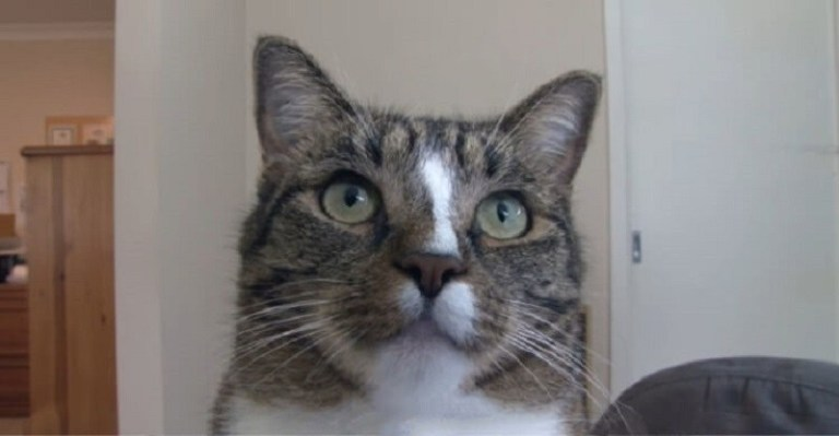 Невероятно умная кошка!