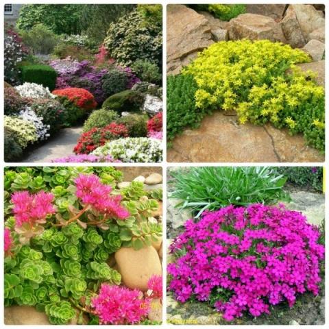 Садовые участки цветы фото и названия