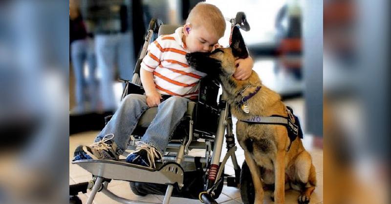 Ребенок неизлечимо болен, а собака обречена на смерть