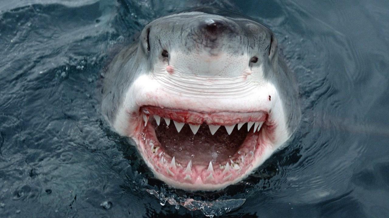 При нападении акулы можно спастись притворившись мёртвым. мифы, наука, разрушители легенд, юмор