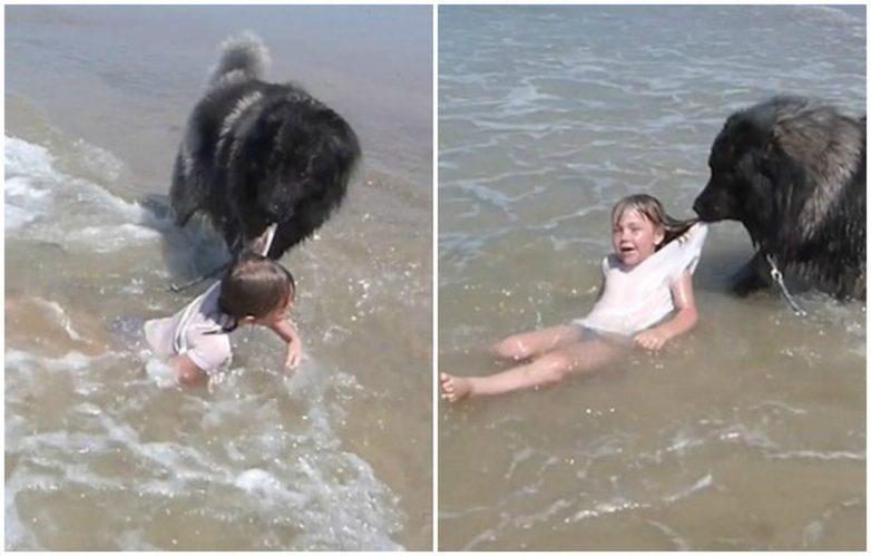 Когда маленькую девочку неожиданно захлестнула волна, пес по кличке Матиас почуял опасность, и без промедления вытащил ребенка на берег