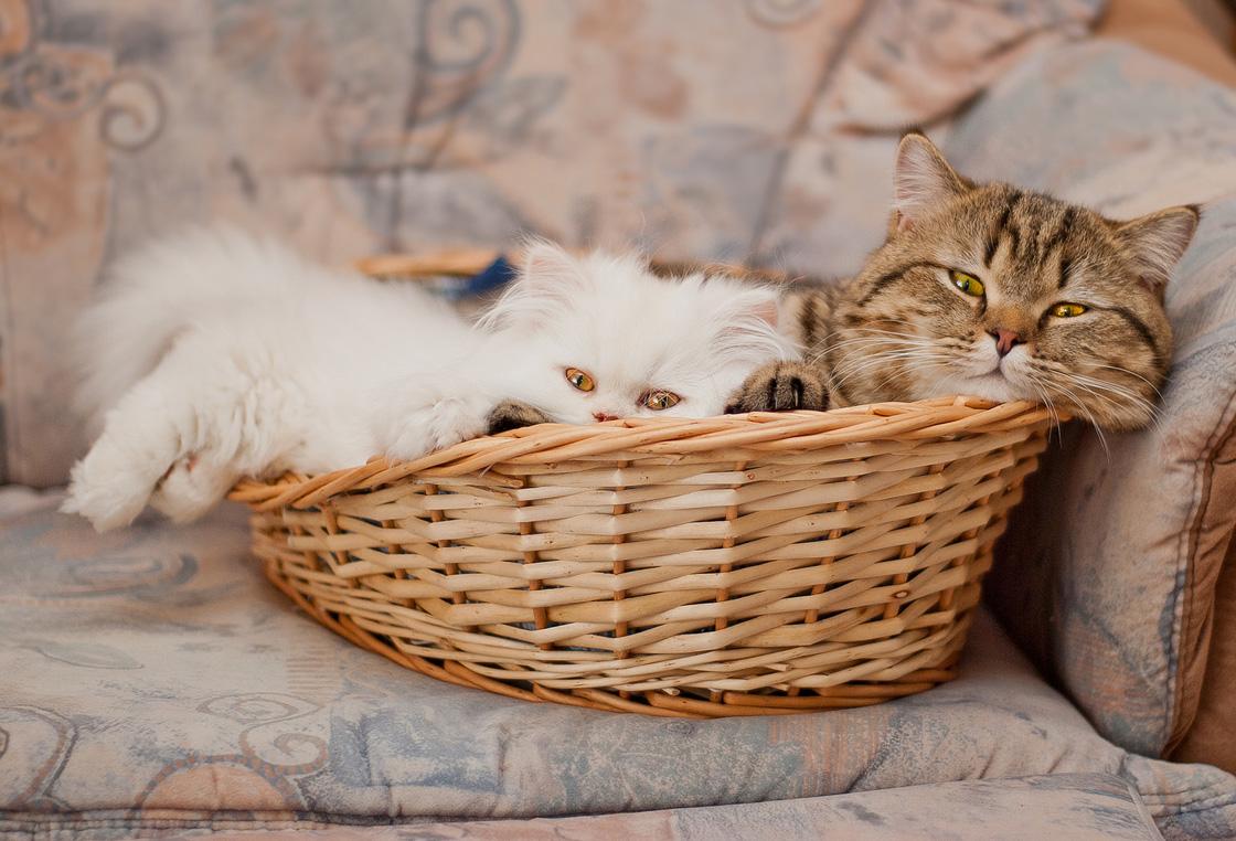 Посмотри картинки котиков