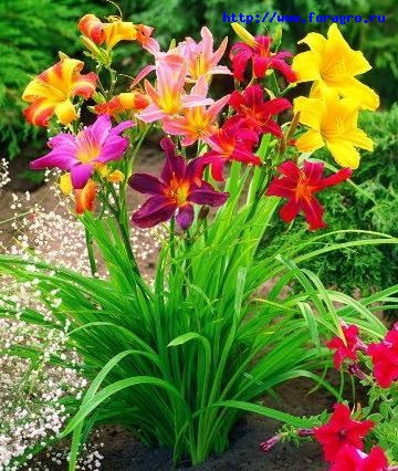 Как подготовить почву для цветника и произвести посадку