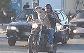 По Астрахани разъезжает пес-байкер