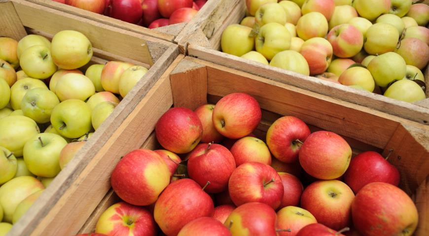 5 лучших способов хранения яблок на зиму дача,полезные советы,сад и огород,урожай