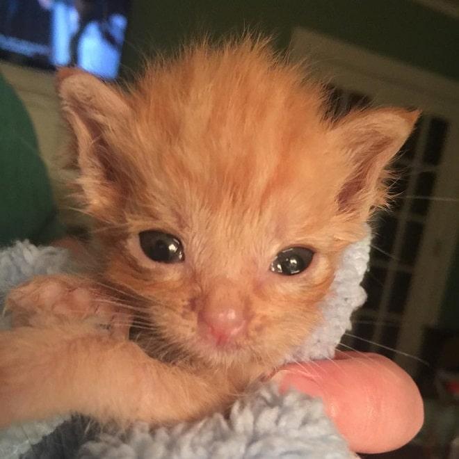 Крошечный котенок