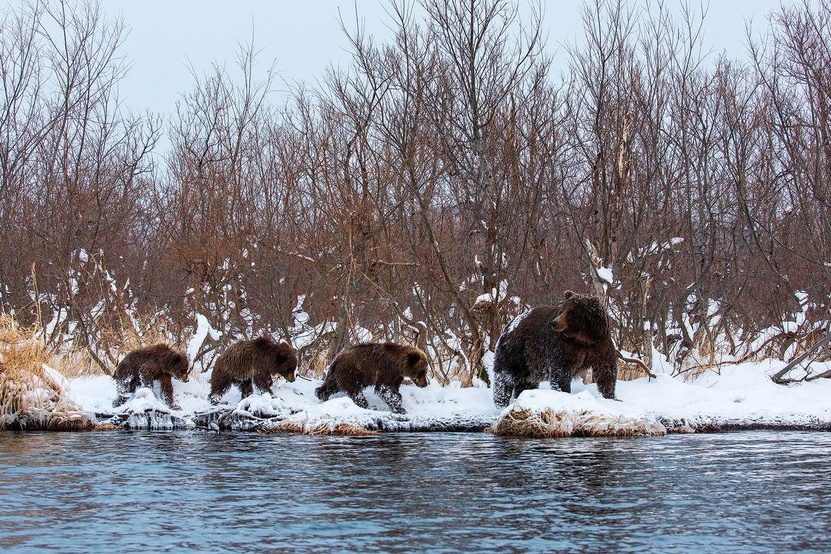 Победители и фавориты фотоконкурса «Дикая природа России – 2018» 18