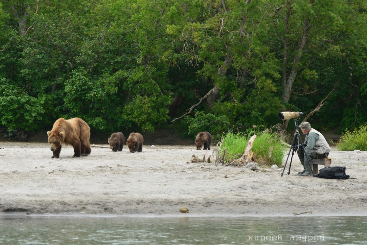 Пять минут из жизни фотографа-анималиста животные, камчатка, медведь, наблюдение, фотограф