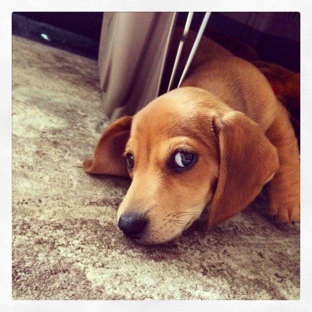 самые милые щеночки в мире (28)