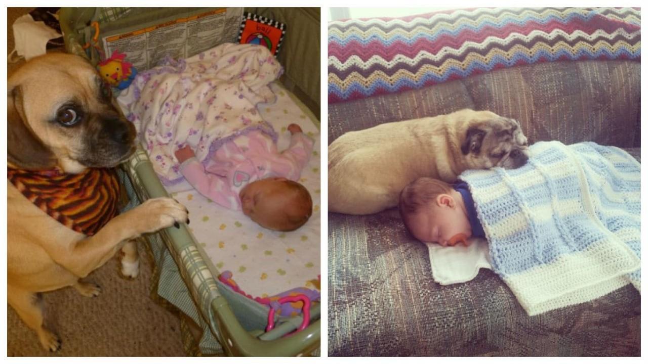 15 собак, которые просто обожают детей
