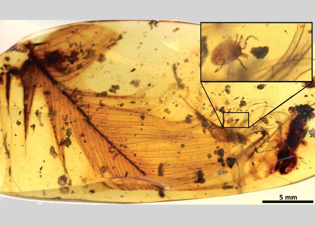 Кровососущие клещи оказались любителями динозавров
