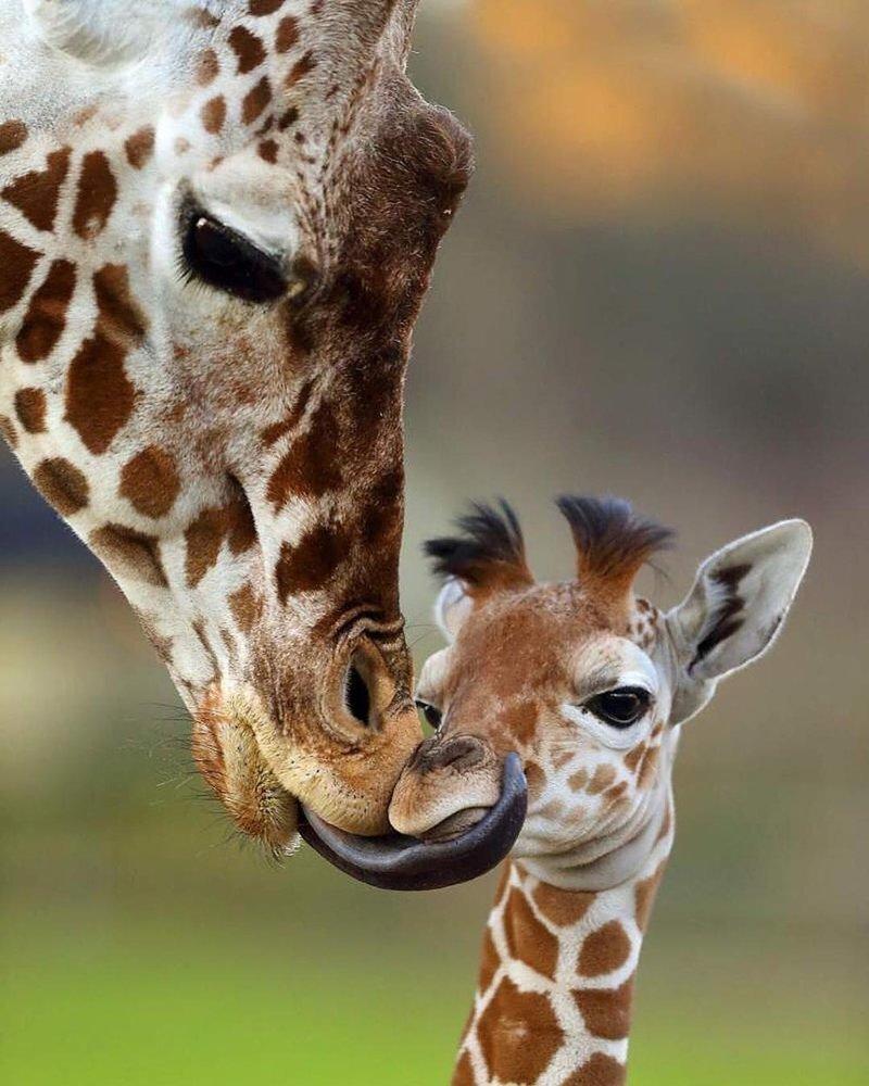 может мама и детеныш картинки милые видно фото