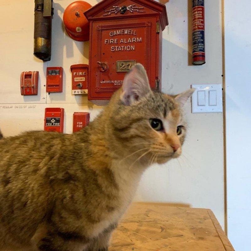 Не в силах терпеть мороз, бродячая кошка пришла к дверям пожарной части история, история спасения, коты, кошка, кошки, помощь животным, спасение животных