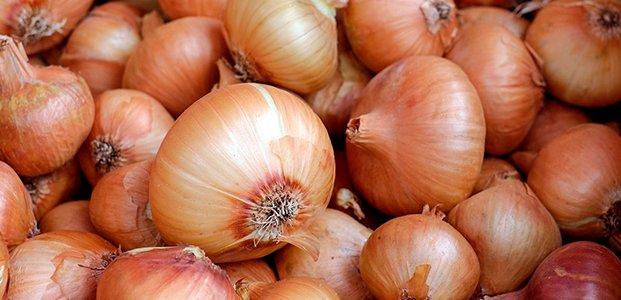 Почему гниет лук – причины и правила хранения