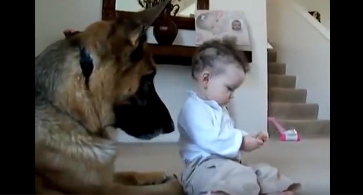 Бесстрашная малышка отбирает еду у большого собаки! Реакция пса — удивительна!