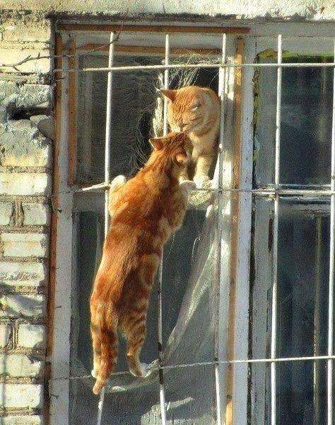 Питерские коты почувствовали весну
