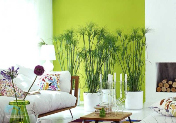 оформление интерьера растениями пример